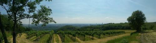 vineyard-421780_1280