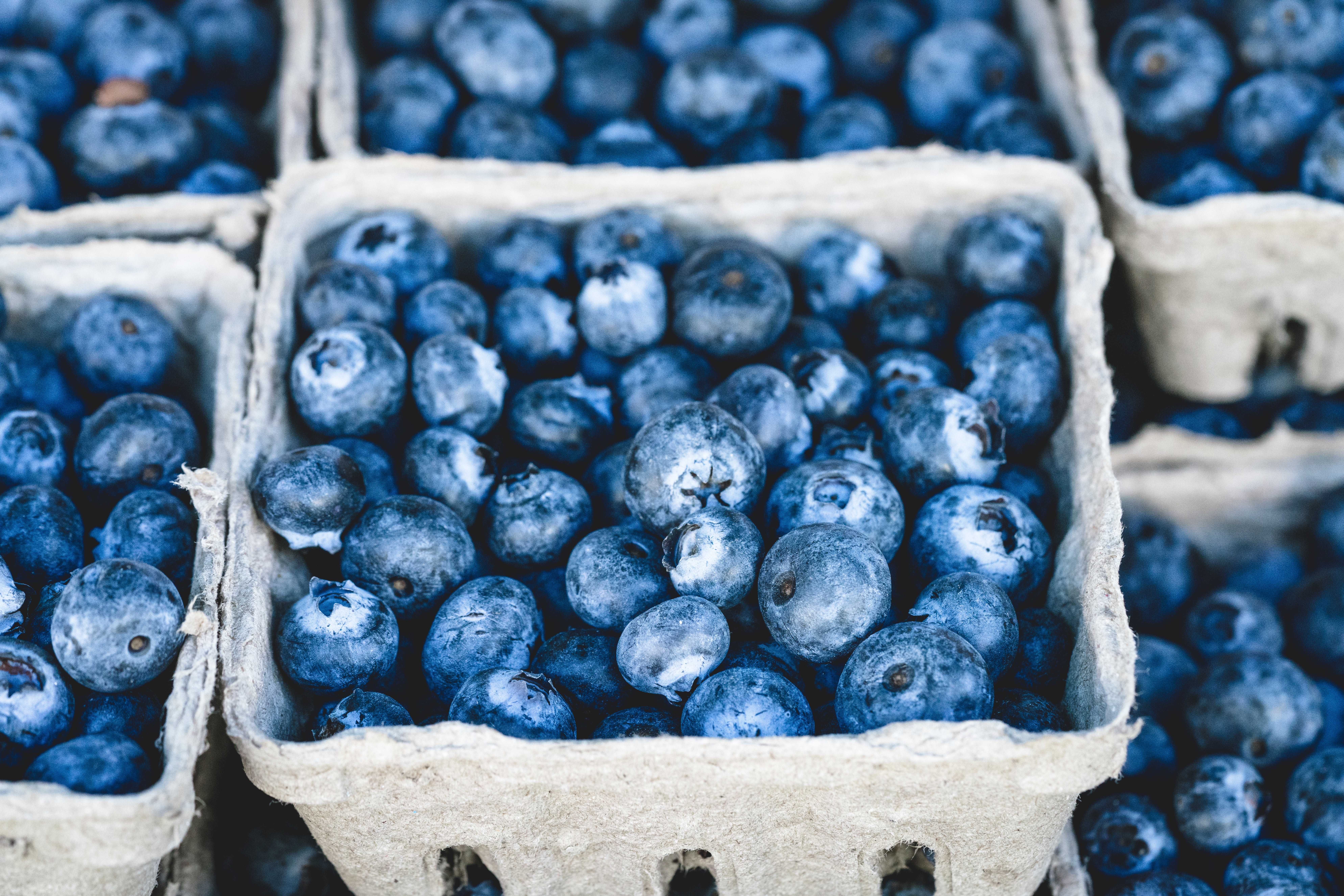 berry-blue-blueberries-70862