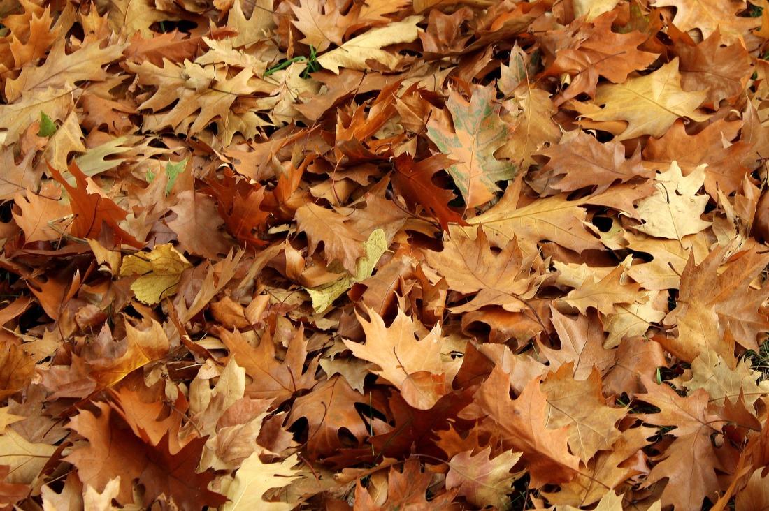 foliage-3766103_1920